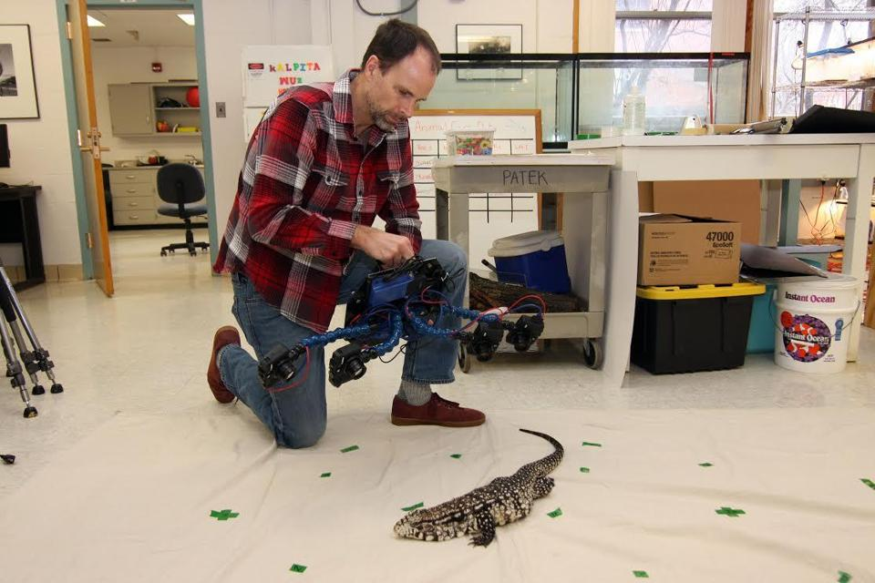 "UMass Amherst professor Duncan Irschick used the ""Beastcam"" to take images of a lizard."