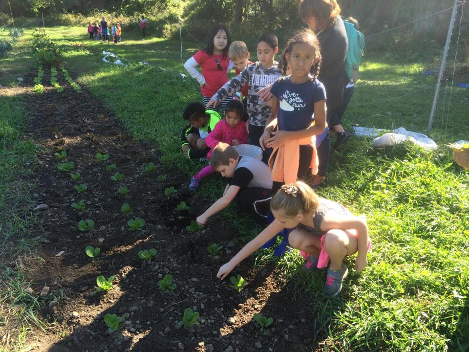 Lincoln-Hancock Community School students helped plant at Holly Hill.