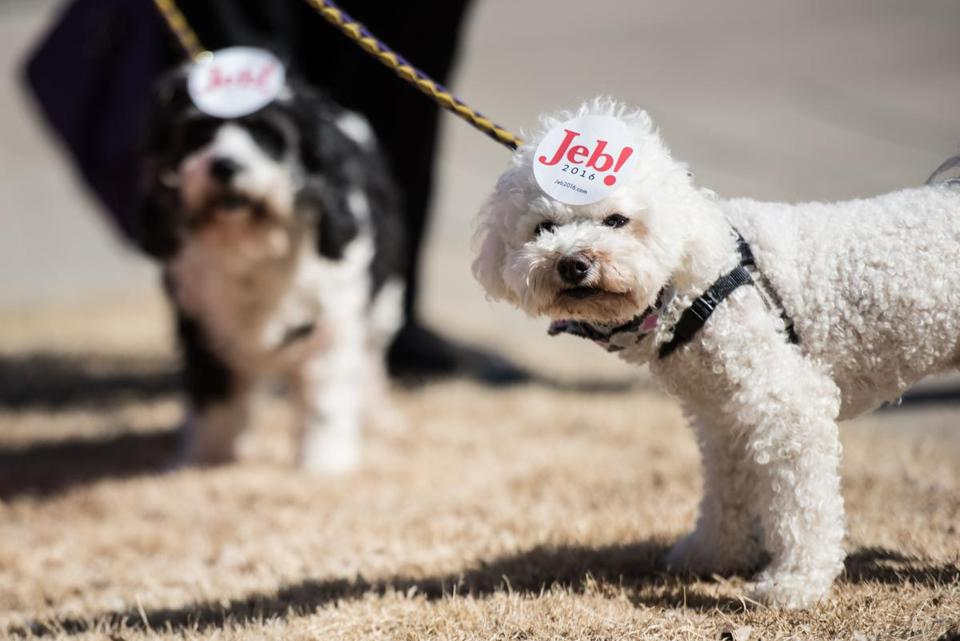 A dog showed its owner's support for Jeb Bush in February 2016.