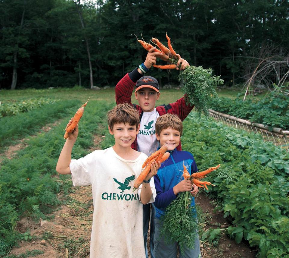 Counting carrots at Chewonki Camp for Boys in Wiscasset, Maine.