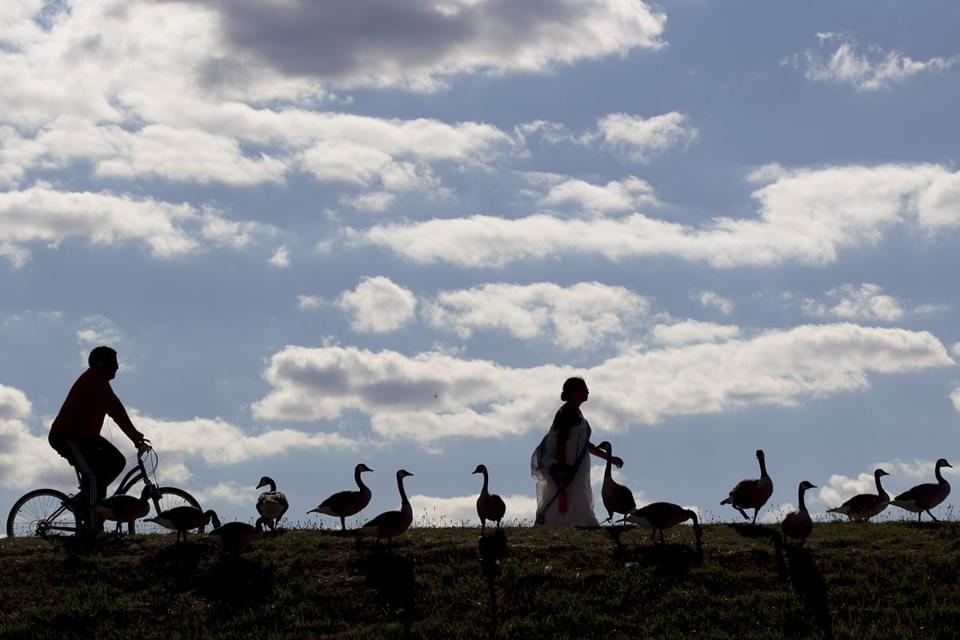 FOR METRO. Chestnut Hill, MA 7/9/2012 Runners, walkers, and cyclists walk along the path by a flock of geese at the Chesnut Hill Reservoir in Chestnut Hill, MA on Monday, July 9, 2012. (Yoon S. Byun/Globe Staff) Section: METRO Slug: n/a Reporter: n/a LOID: 5.0.1725229525