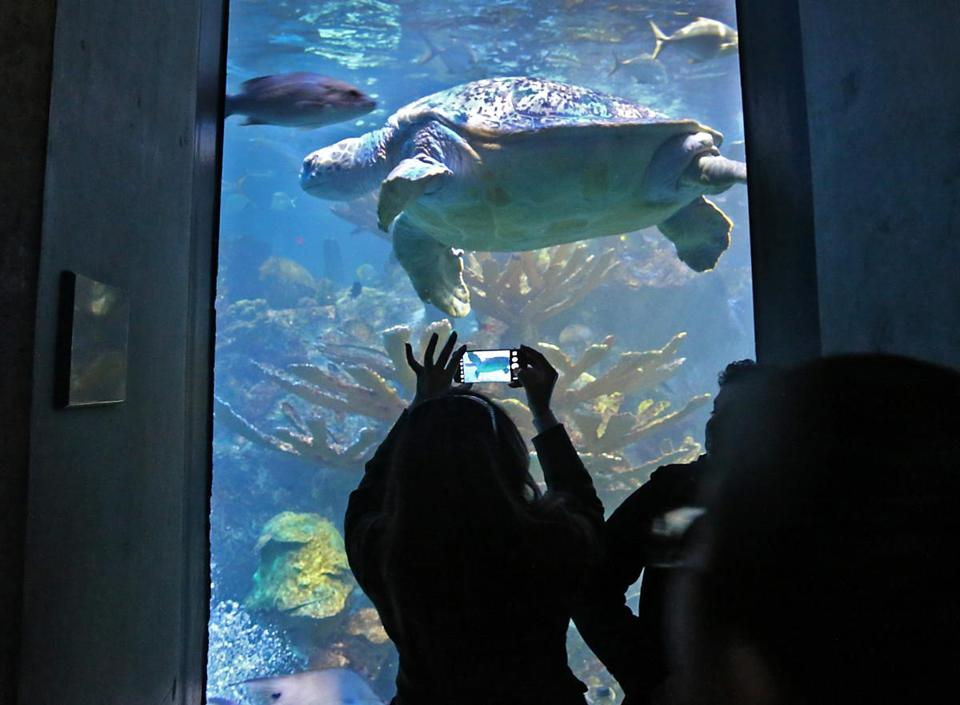 The New England Aquarium is one of the cultural venues in the Boston area that is taking part in a new arts program for low-income people.