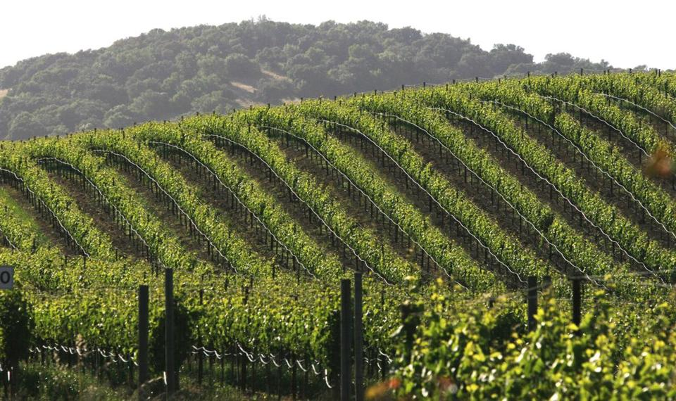 May 23, 2005; Sonoma, CA, USA; Scenic vineyards and rolling hills in Sonoma Wine Country. Mandatory Credit: Photo by Krista Kennell/ZUMA Press. (©) Copyright 2005 by Krista Kennell Library Tag 03292006 Food