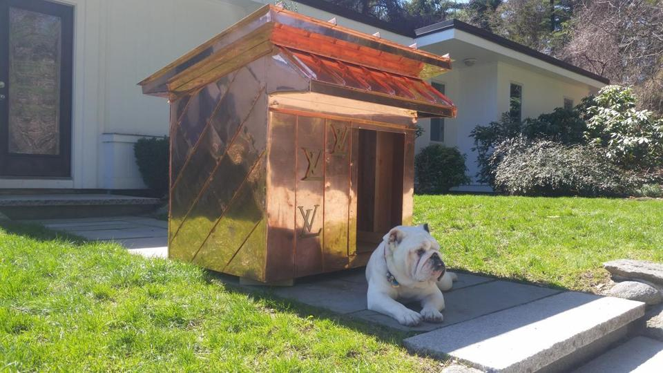 Lugnut tests out a designer doghouse his owner, John Veale, is selling.