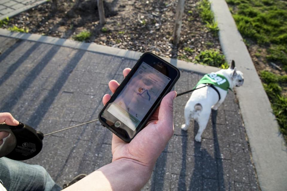 Nick Bailey, a dog walker for Wag, shows how his route is visible to his customers on his smartphone while walking Franny, a French bulldog, in New York last week.