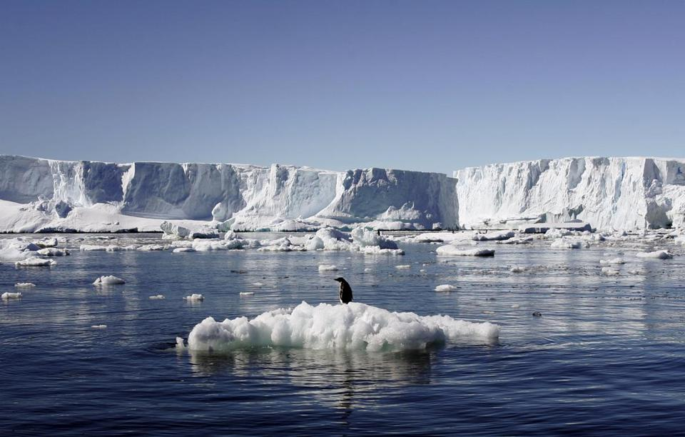 An Adelie penguin stood atop a block of melting ice near a French station in East Antarctica in this January 2010 photo.