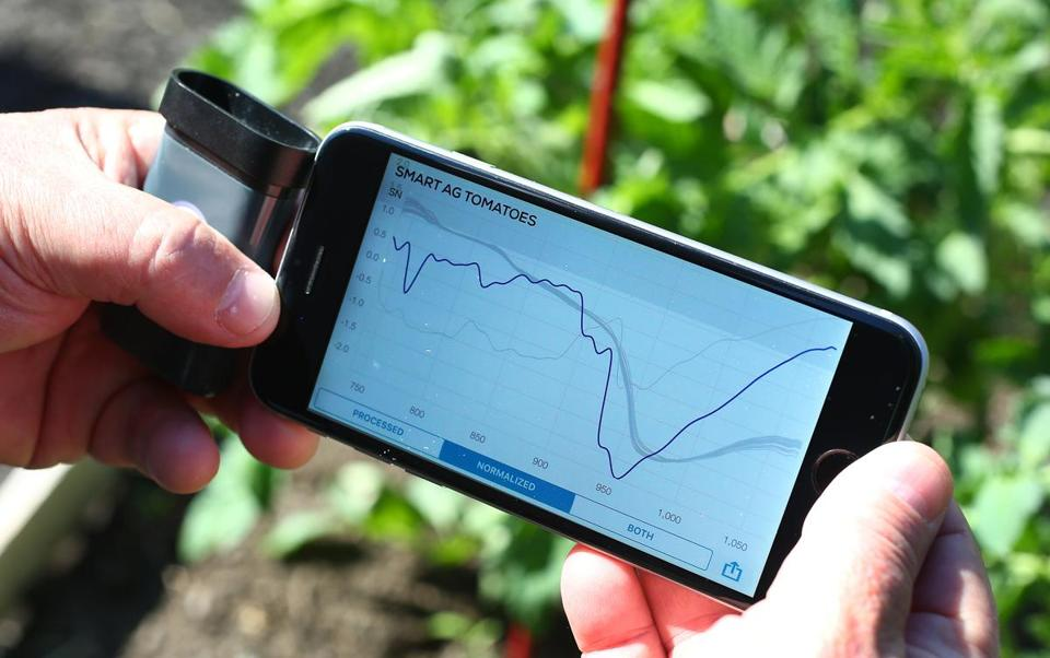 Rob O'Reilly's iPhone displays the SCiO application graph showed the response of a tomato on the vine to the spectrometer.