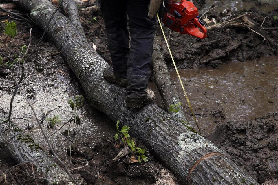 One of Goodhouse's workers, Bill Brock, ran his measuring tape along a fallen log as he sawed it into lengths.