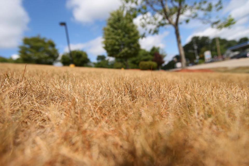 Grass in front of a shopping center on Route 3A in Cohasset reflects a lack of water.