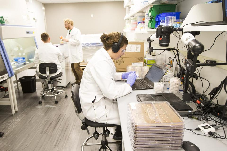 Boston, MA - 7/20/2016 - Lab work is done at the offices of Indigo, a company that engineers crops, in Boston, MA, July 20, 2016. (Keith Bedford/Globe Staff)