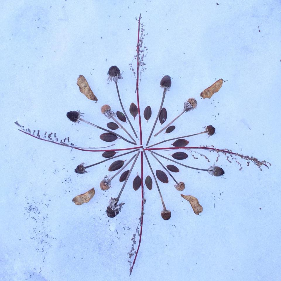 02mandala - Frozen snow and dogwood mandala, Essex, MA (Dried flowers, sticks and seedpods). (Instagram)