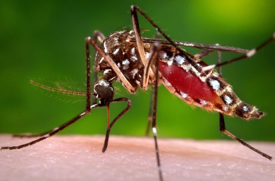 Zika is transmitted by mosquito bites and can also be transmitted sexually.