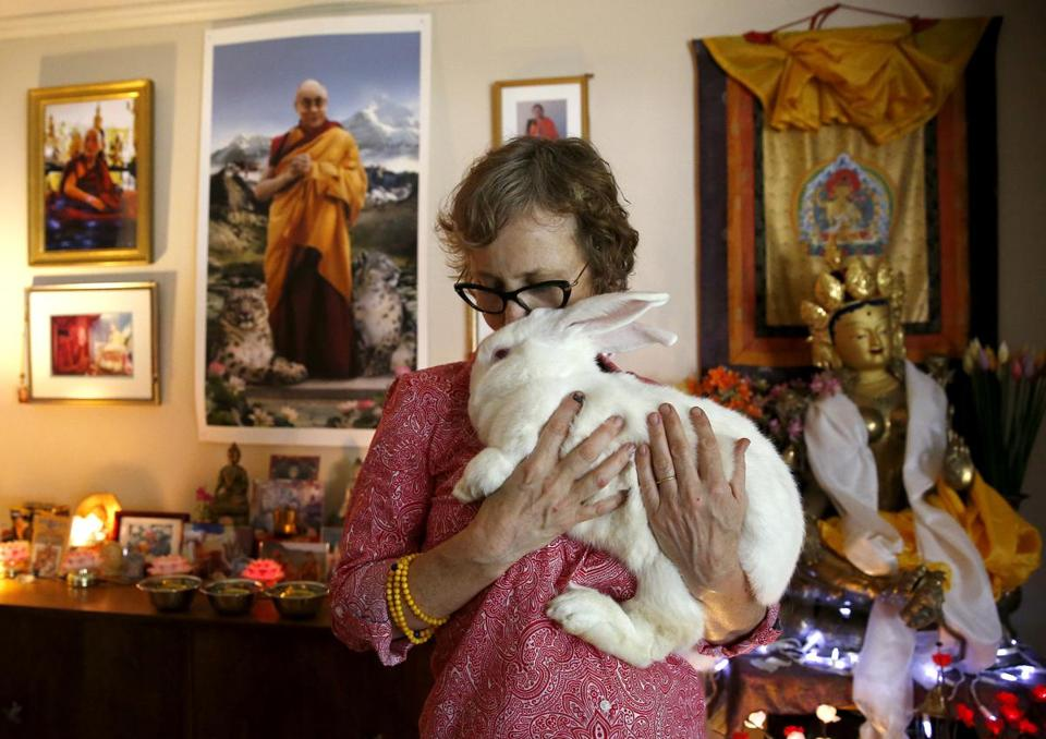 Wendy Cook with Kunsang, also known as Papa Bear, one of the rabbits she bought for a total of $20,000.
