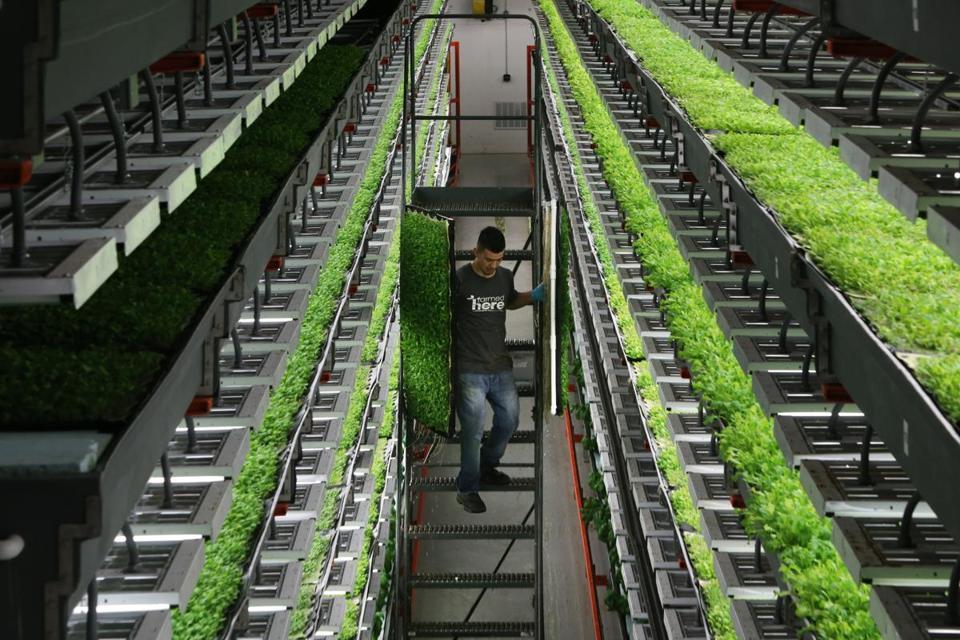Organic farmers fight USDA to defend their turf