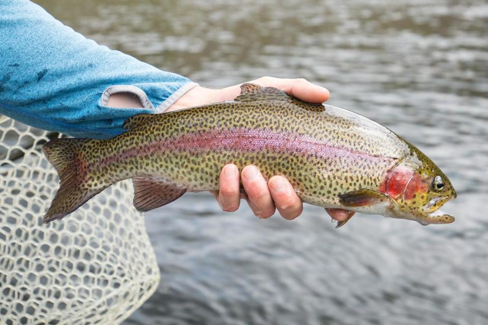 The fly fishing and bird shooting by the Deerfield River can be as good as anything out West.