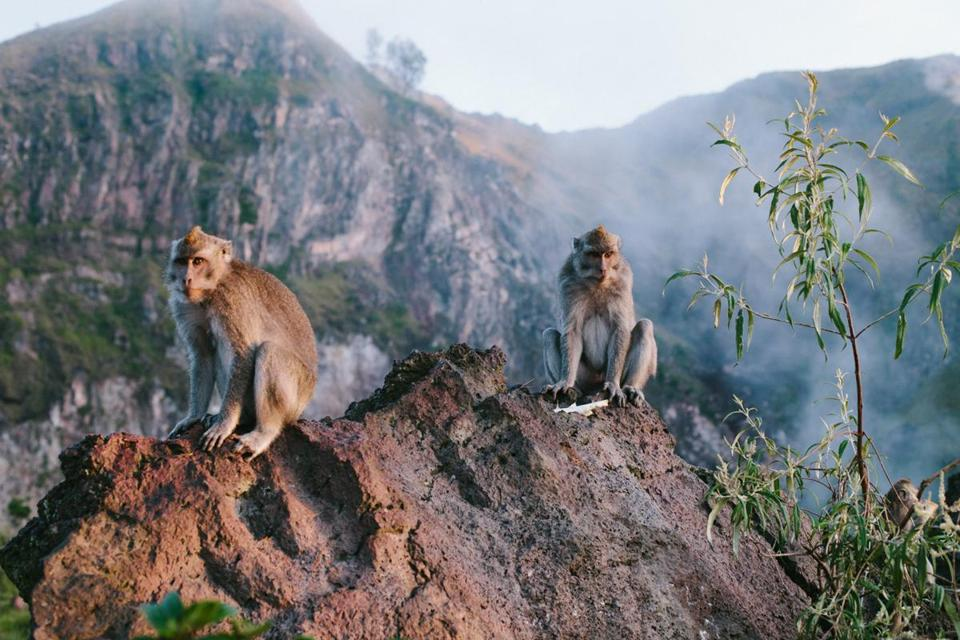 Monkeys at the top of Mount Batur.