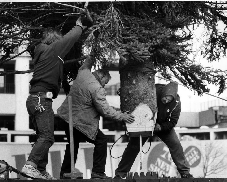November 4, 1991, If you think putting a Christmas tree in the living room is tough try this one for size. 20th annual Christmas Tree installation at the Prudential Center. A 50 foot White Spruce annual gift from the people of Nova Scotia to Boston. Globe Staff photo David Ryan. Library Tag 11262006 City Weekly