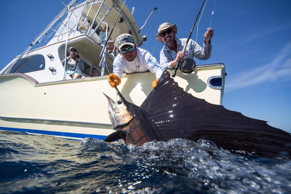 An angler holds up a Guatemalan sailfish, caught on a fly rod