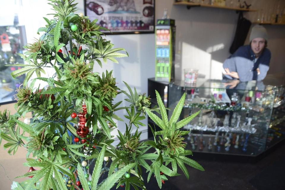 A faux marijuana Christmas tree sits in the window of Shire Glass, a shop in Great Barrington.