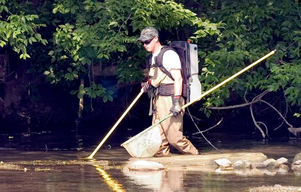 Josh Collins, an aquatic ecologist, used a shocker unit to help find crawfish in the South River near Dooms, Va.