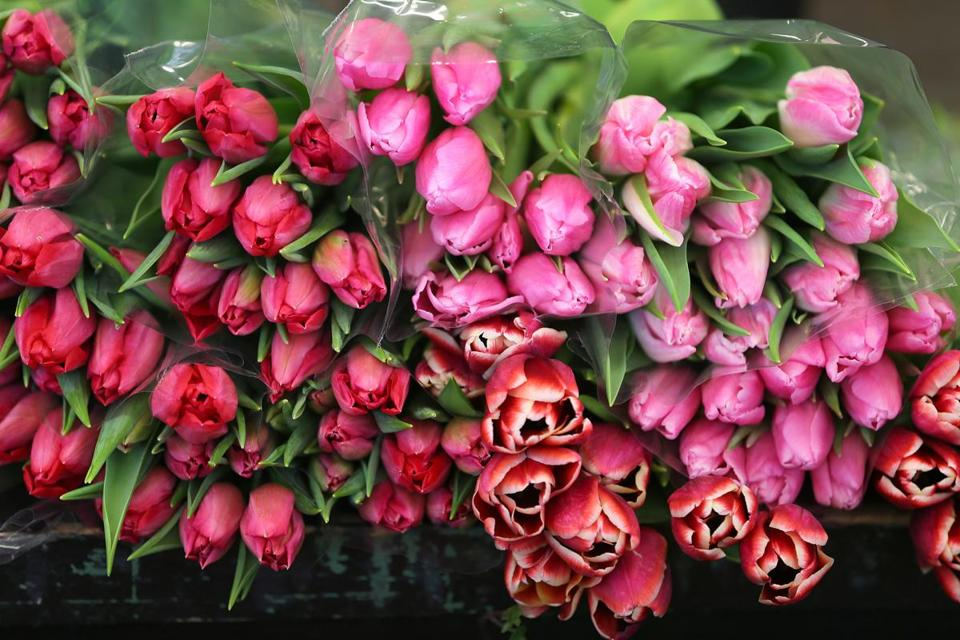 Boston-12/16/2016- The Boston Flower Exchange is in it's last days at their location at 540 Albany Street before closing. Most vendors will move to Chelsea in February. Tulips for sale at R.J. Carbone. John Tlumacki/Globe Staff (business)