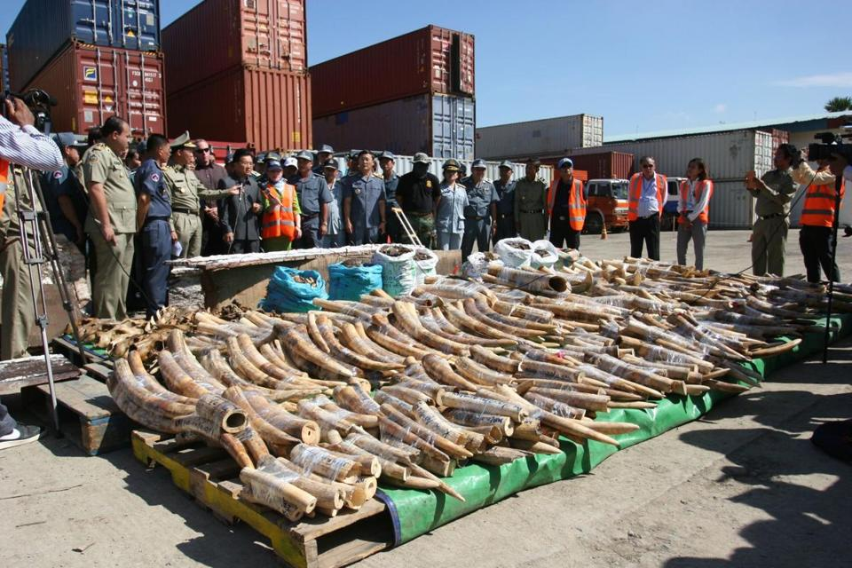 The findings included 1.3 metric tons of ivory.