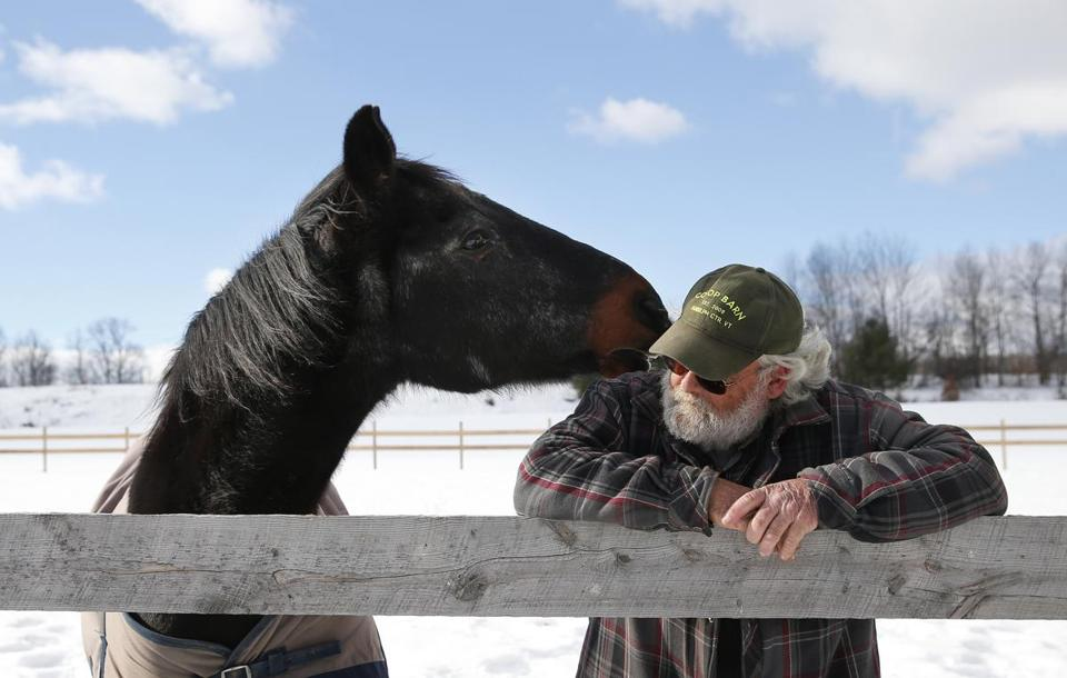 Waco nuzzled Donnie MacAdams as he searched for the animal crackers MacAdams feeds him at the barn in Randolph Center, Vt.