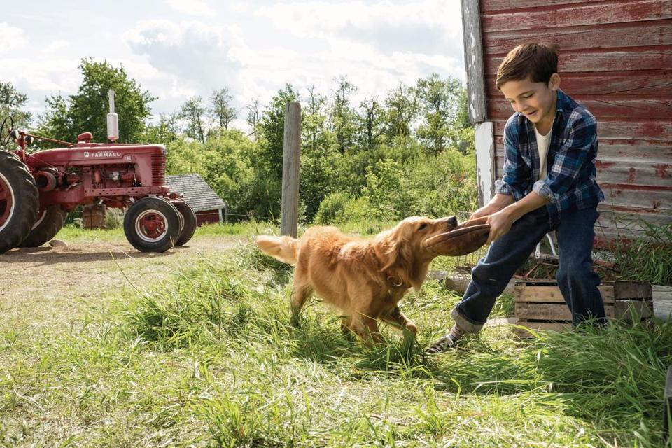 A Dog S Purpose Young Ethan Bryce With Puppy Bailey