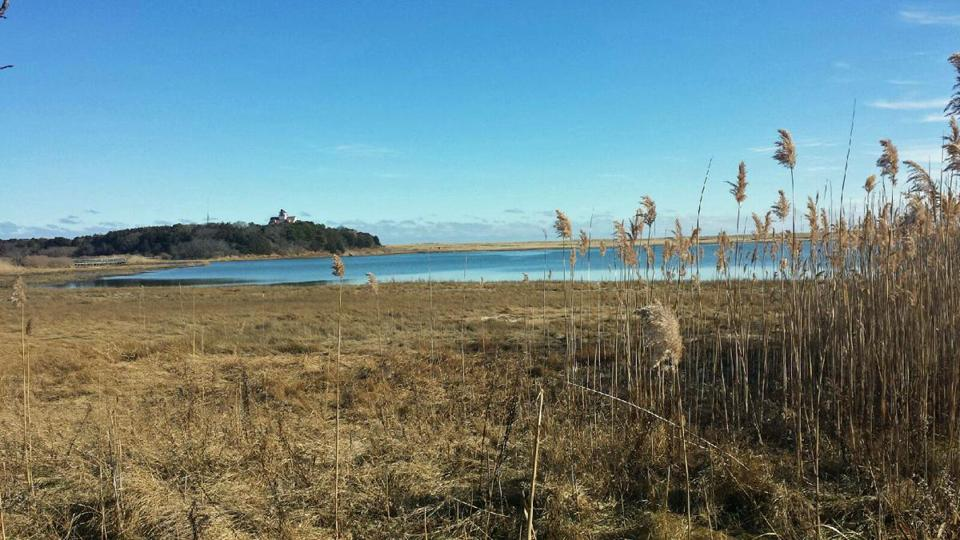 19capewinter - A hike along Nauset Marsh Trail (with a spur to Coast Guard Beach) offers lovely views and few other people. (Diane Bair)
