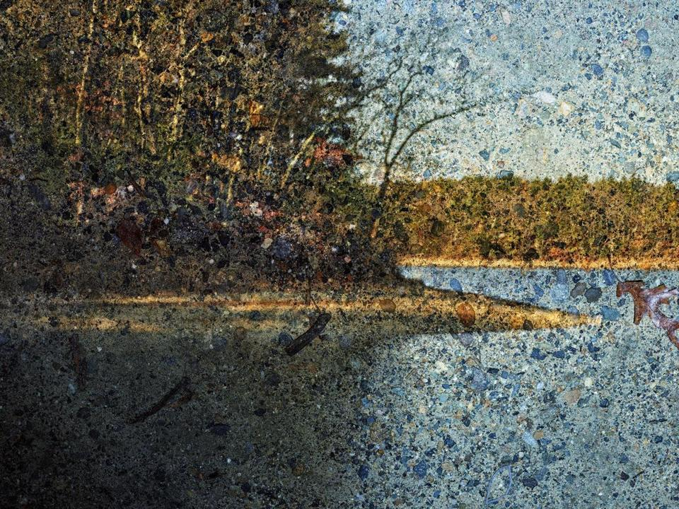 Abelardo Morell's panoramic photograph of Walden Pond.