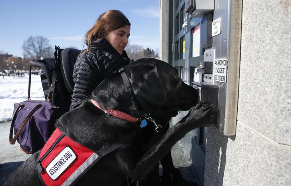 Boston, MA -- 2/14/2017 - Carolyn Barrett's service dog, Shadow, presses the button to open an automated door. (Jessica Rinaldi/Globe Staff) Topic: 05servicedogs Reporter:
