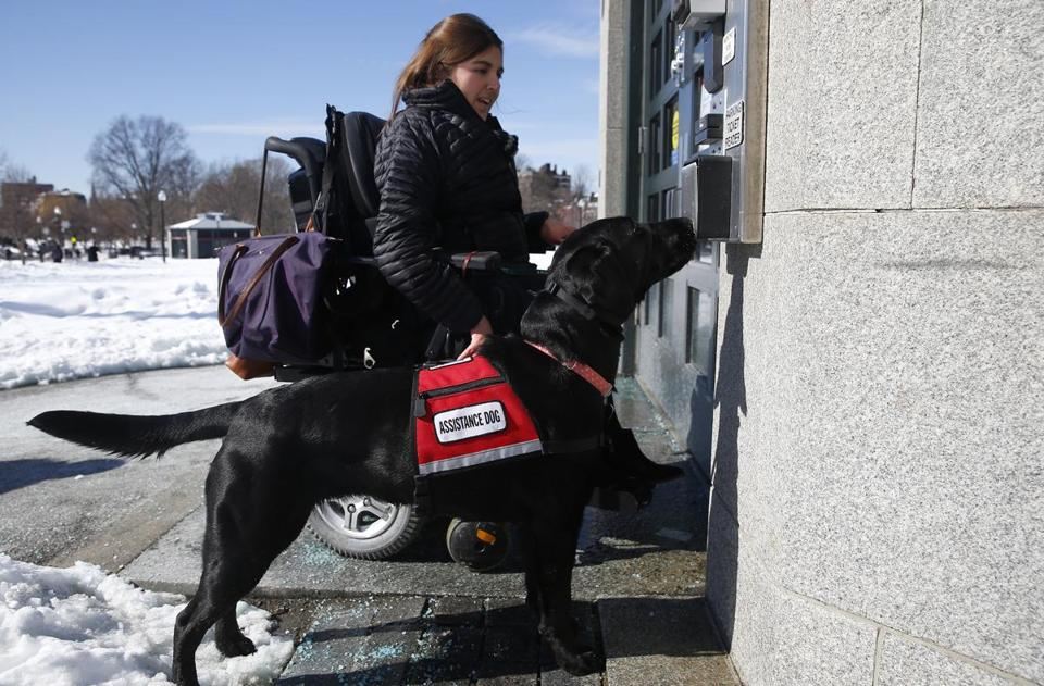 Carolyn Barrett's service dog, Shadow, presses the button to open an automated door. She says bogus service dogs make her dog less accepted.