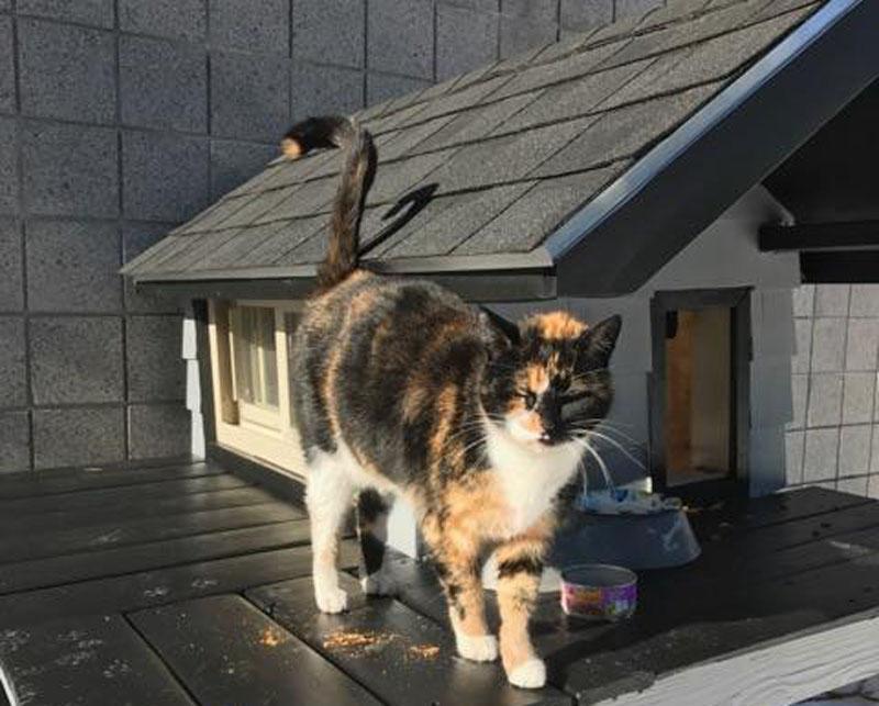 Boston SWAT Team Builds Shelter for Mascot Cat