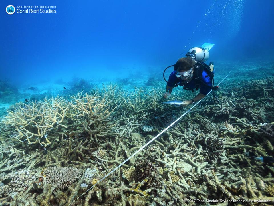 In this October 2016 photo provided by ARC Center of Excellence for Coral Reef Studies, a scientist measures coral mortality following bleaching on the northern Great Barrier Reef, Austrlia. Reducing pollution and curbing overfishing won't prevent the severe bleaching that is killing coral at catastrophic rates, according to a study of Australia's Great Barrier Reef. In the end, researchers said, the only way to save the world's coral from heat-induced bleaching is with a war on global warming. (Tane Sinclair-Taylor/ARC Center of Excellence via AP)