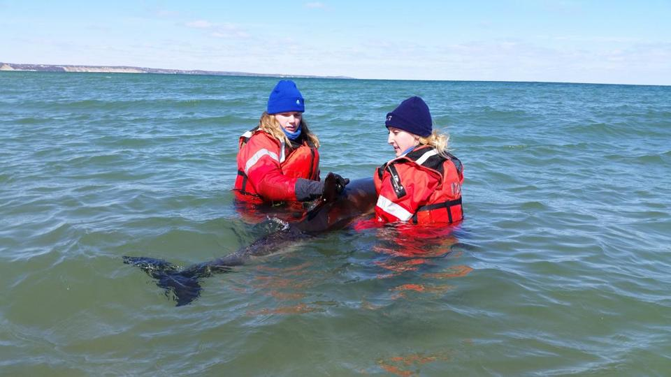 Rescuers released a common dolphin that had become stranded in Provincetown this week.