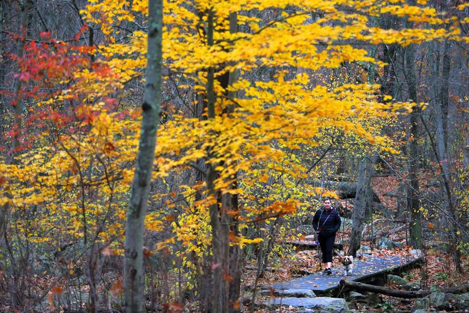 Newton, MA - 11/16/16 - Andrea Alverado (cq) enjoys a quiet day on a woodsy trail in the Hammond Pond Reservation with her Cavalier King Charles spaniel Charlie (cq). (Lane Turner/Globe Staff) Reporter: (in caps) Topic: (17brightspot)