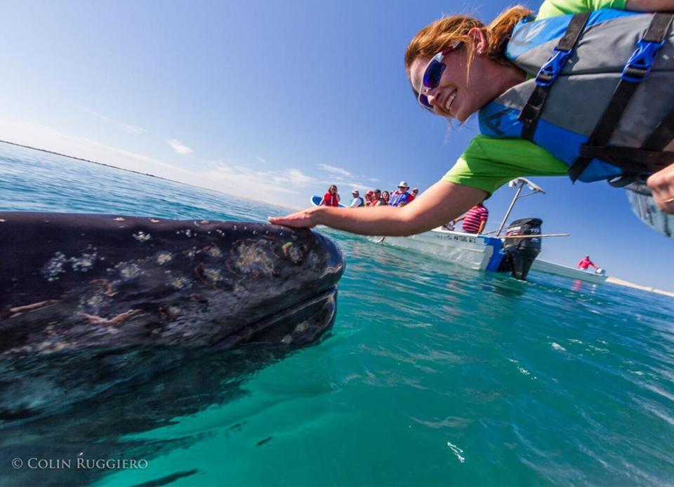 AdventureWomen excursions have taken travelers whale watching off Mexico's Baja Peninsula.