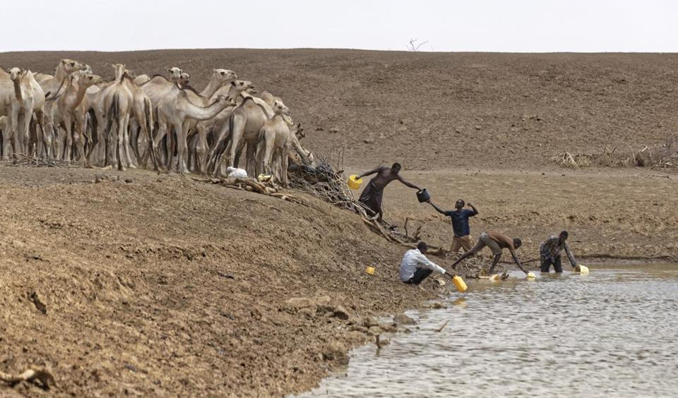 "Camel herders scoop up water in plastic buckets from one of the few watering holes in the area, to water their animals near the drought-affected village of Bandarero, near Moyale town on the Ethiopian border, in northern Kenya Friday, March 3, 2017. The U.N. humanitarian chief, Stephen O'Brien, toured Bandarero village on Friday and called on the international community to act to ""avert the very worst of the effects of drought and to avert a famine to make sure we don't go from what is deep suffering to a catastrophe."" (AP Photo/Ben Curtis)"