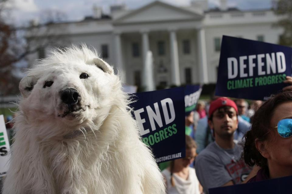 WASHINGTON, DC - MARCH 28: An environmental activist wears a polar bear costume during a protest outside the White House March 28, 2017 in Washington, DC. Activists protest against President Trump's latest executive order which will roll back President Obama's rules regulating fossil fuel power plants and cutting greenhouse gas. (Photo by Alex Wong/Getty Images)