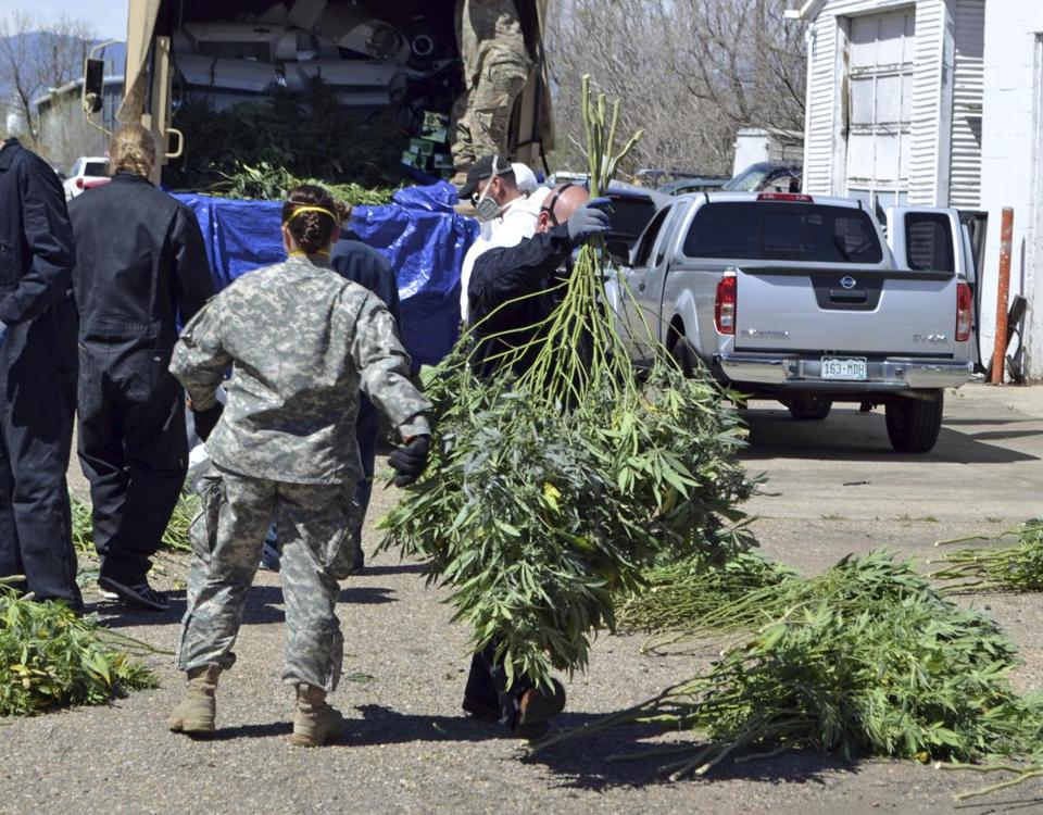 FILE - In this April 14, 2016 file photo, investigators load marijuana plants onto a Colorado National Guard truck outside a suspected illegal grow operation in Denver. Colorado is set to become the first state to use marijuana taxes to fund police efforts to crack down on illegal growing operations. A measure scheduled to be signed into law Thursday, June 8, 2017, sets aside nearly $6 million a year in Colorado marijuana tax revenue to reimburse police for their investigations of black-market marijuana activity. (AP Photo/P. Solomon Banda, File)