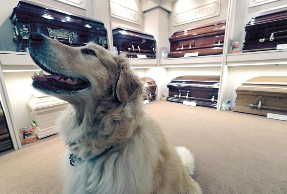 Tucker, a golden retriever, has been comforting mourners at Gately Funeral Home in Melrose for nine years.