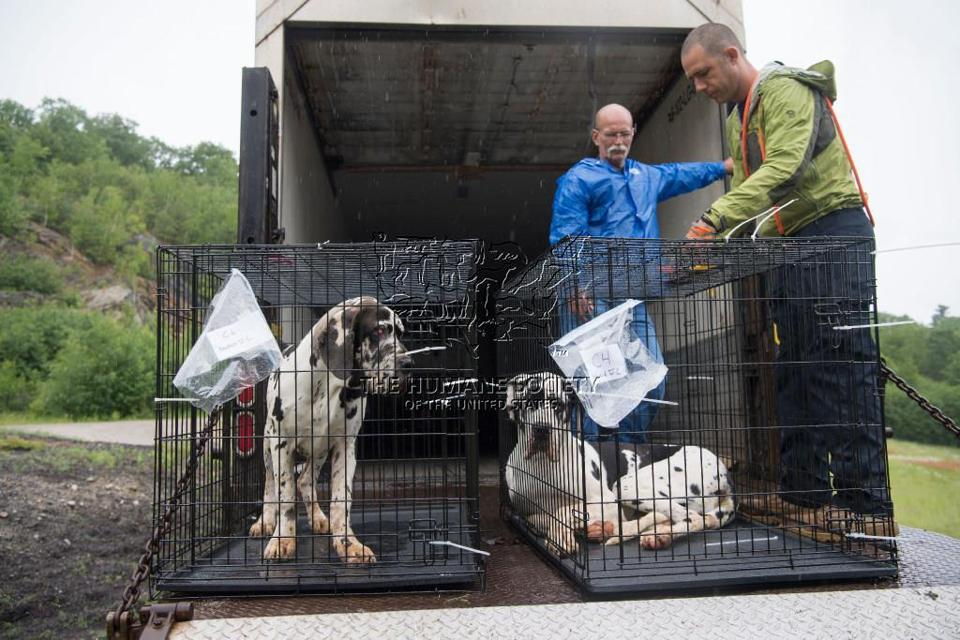 Humane Society Rescue Team volunteers John Sidenstricker (left) and John Peaveler helped remove dogs from a Wolfeboro, N.H., home.