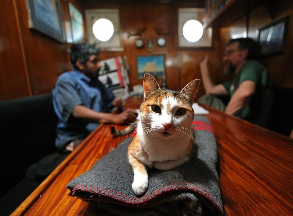 BOSTON, MA - 6/21/2017:TALL SHIPS.... cat's name is Fiji on Picton Castle ship in the Captains quarters at Boston Fish Pier. (David L Ryan/Globe Staff ) SECTION: METRO TOPIC 21tallshipcats