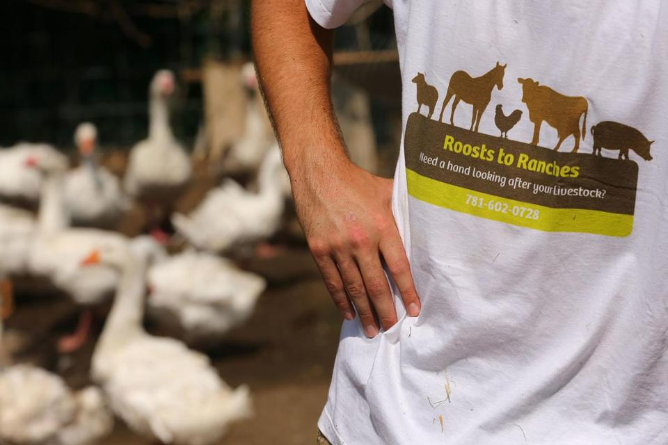 East Bridgewater-07/18/2017 Tyler Dalton started a business after he graduated from South Shore Charter School called Roosts to Ranches in which he takes care of peoples animals when they are away. He waeras a t-shirt with his company's name at Bill Benner's homestead. John Tlumacki/Globe Staff(south)
