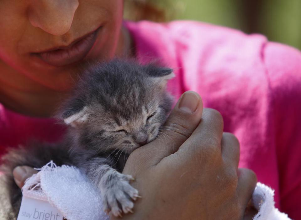 Boston, MA -- 8/6/2017 - Mithu Lahiri, of Jamaica Plain, held a two week old kitten up for adoption who she and her sister hope to claim during the first Caturday gathering of cats, their owners and cat lovers on Boston Common. The event had to be moved from Saturday because of the weather thus ruining the pun. (Jessica Rinaldi/Globe Staff) Topic: 07cats Reporter: