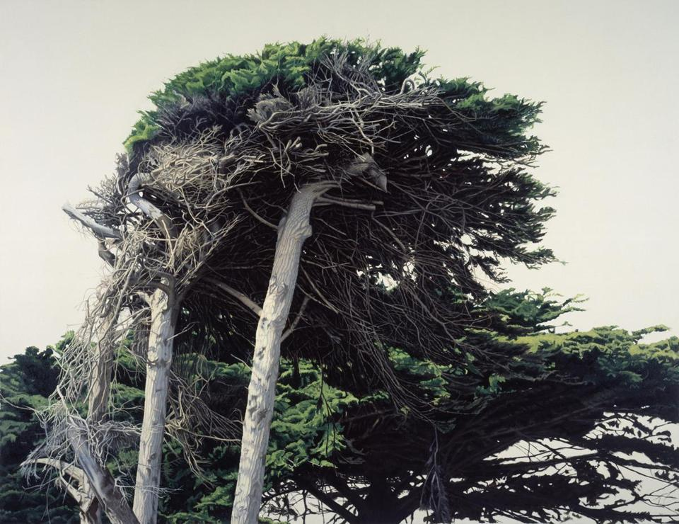 "Sam Cady's ""Cypress, Pacific Coast"" from the ""Painted Landscapes"" exhibit."