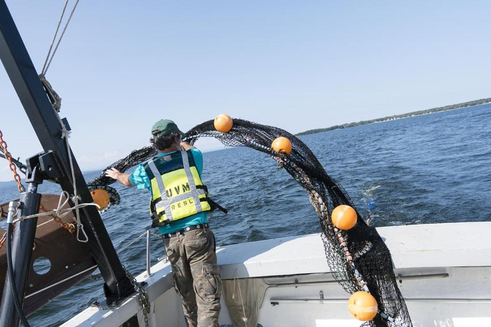 Melosira Captain Steve Cluett threw a trawl net into the water on Lake Champlain.