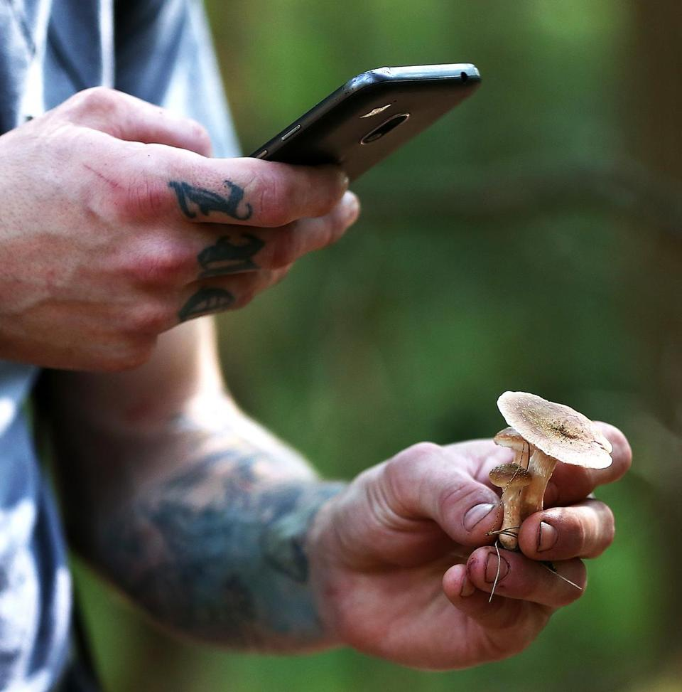 Chef Eric Buonagurio takes a picture of mushrooms to confirm an ID later.
