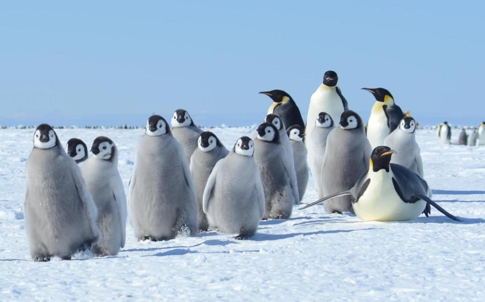 A group of penguins near McMurdo Station.