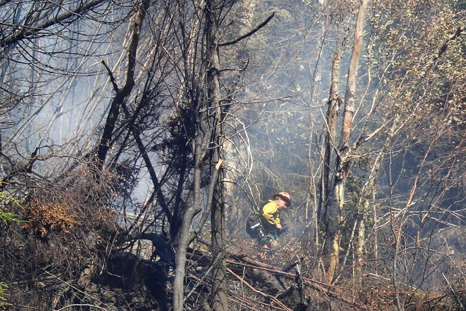A US Forestry firefighter stood near the summit of the ridge surrounded by burnt trees.